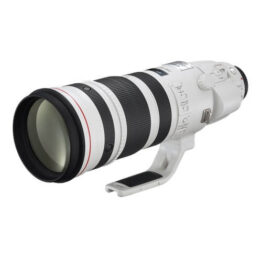 EF 200-400mm f/4L IS USM with Ext 1.4x